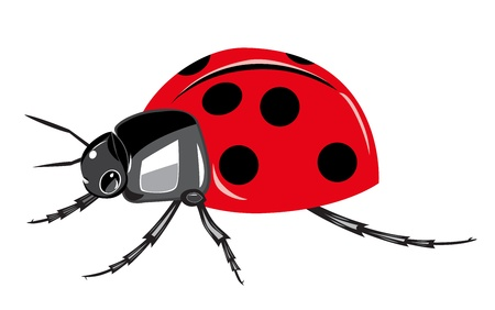 Ladybird isolated on white background  Vector