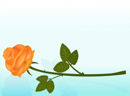 rose bud: Lying orange rose on blue background with copy space  Illustration