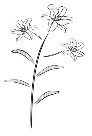 Black and white lily drawing vector illustration  Vector