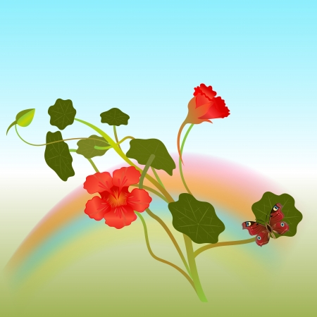 nasturtium: Indian cross flowers with butterfly  illustration