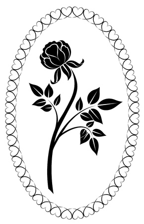 Black and white rose drawing  illustration   Vector