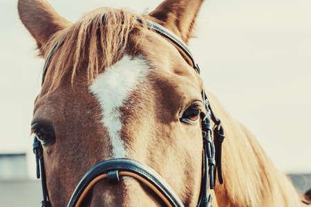 Close-up beautiful horse head on light background 版權商用圖片