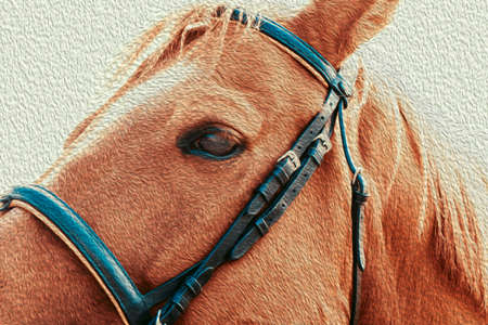 Close up beautiful horse head on light background.