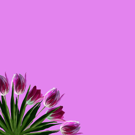 Greeting card template with realistic beautiful blooming tulips pink colors, green leaves on pink background.