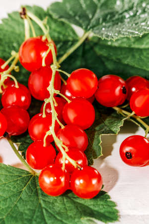 Juicy currant. Fresh red currant with green leaves on white background, close up ,.