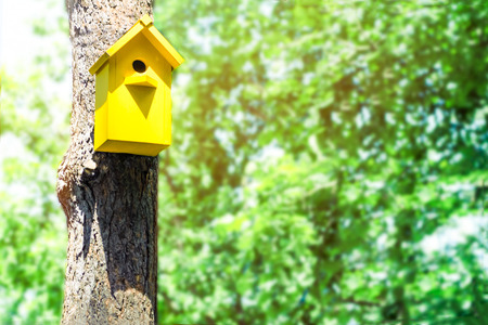 The yellow birdhouse on a tree in spring forest. Concept of approach of spring, summer, birds arrival, spring mood