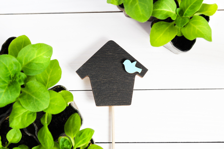 Topper in the form of house with young sprouts, shoot, seedling, sapling in a wooden box. Flat lay with copy space