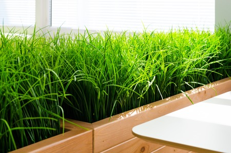 Bright green grass on a gray wall background in minimalism style. Example of indoor landscaping. Archivio Fotografico