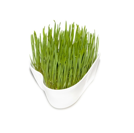 Green wheat grass in white heart-shaped pot on white isolated background  Stock Photo
