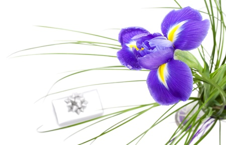 Dark purple iris flower isolated on white background and silver gift box with silver ribbon Stock Photo