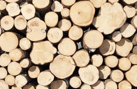 Pile of felled tree
