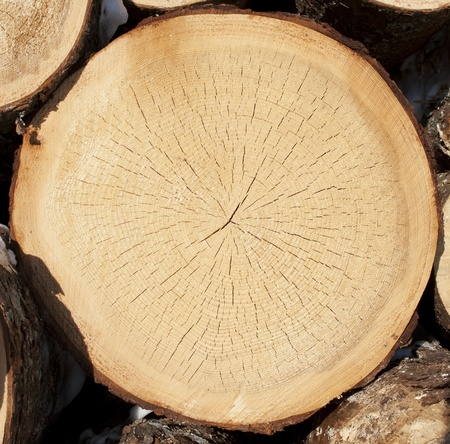 Stump of tree felled, section of the trunk with annual rings  photo