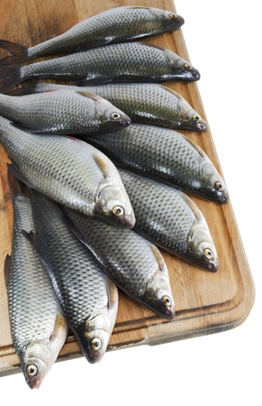 River fish, roach on the  wooden kitchen board on white isolated background Stock Photo - 13330048