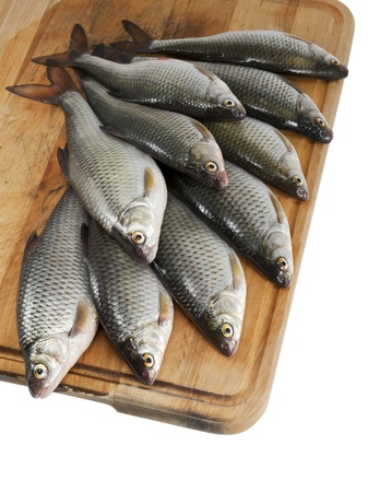 River fish, roach on the  wooden kitchen board on white isolated background