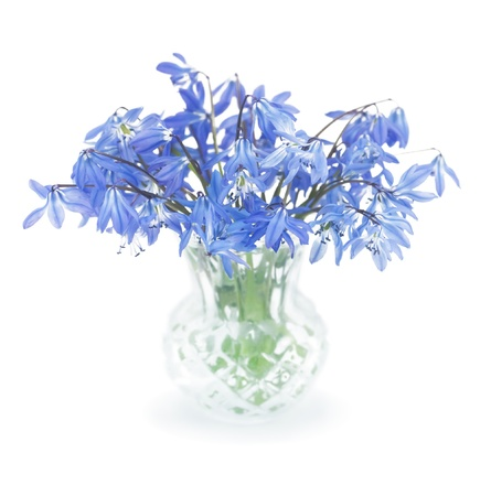 First spring blue  flowers in a small crystal vase photo