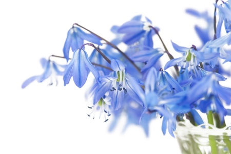 Floral background of first spring blue flowers close up