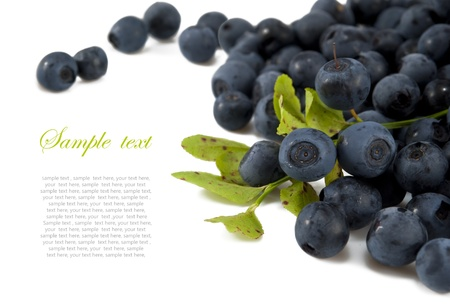 Blueberries with leaves with sample text on white  isolated background