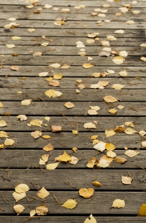withering: Autumn  birch leaves and pine needles on a dark wooden  terrace floor as background Stock Photo