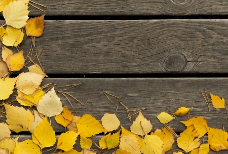 Autumn  birch leaves and pine needles on a dark wooden background