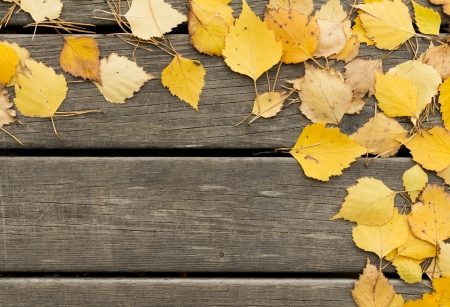 withering: Autumn  birch leaves and pine needles on a dark wooden background