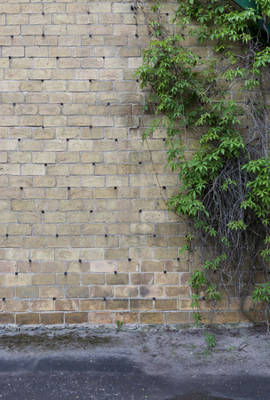 The creative gray brick wall with pig-iron rivets and wild grapes as background photo