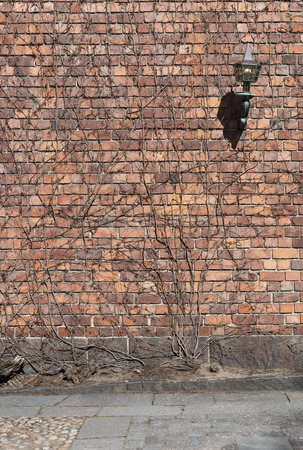 Old vintage brick wall covered with stalks of lianas and ancient lamp on a wall  in bright sunny day as background