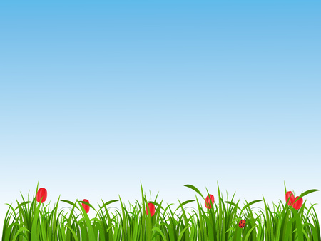 tulips in green grass: Green grass and red tulips on a blue background, clear spring day
