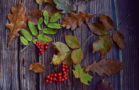 Set of fallen leaves and Rowan berries on a wooden background Imagens