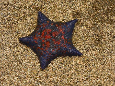 estrellas de mar sobre la arena  Foto de archivo - 1357563