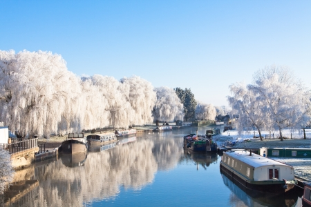 Winter willow tree at the riverside  Imagens