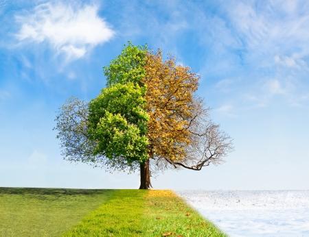 Vier seizoenen boom tijd die concept overgaat Stockfoto
