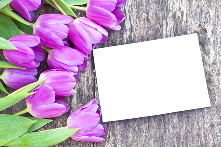 brawn: violet tulips on the oak brawn table with white sheet of paper 6