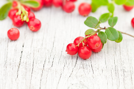 cowberry: macro image of fresh cowberry on the old white table