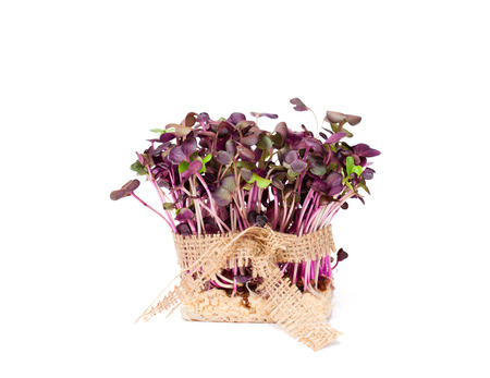 sack cloth: Purple  radish fresh sprouts with sack cloth ribbon isolated Stock Photo