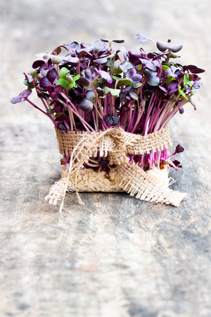 sack cloth: Purple  radish fresh sprouts with sack cloth ribbon on wooden table Stock Photo