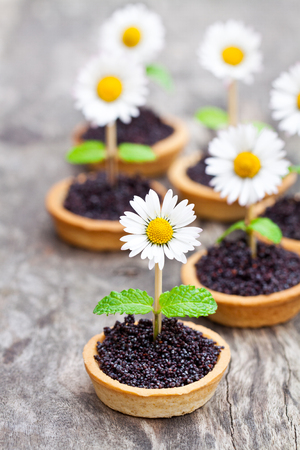 Homemade  chocolate caramel tartlets with poppy seeds and sugar. Creative garnish with real daisy and mint leaves. Stock Photo