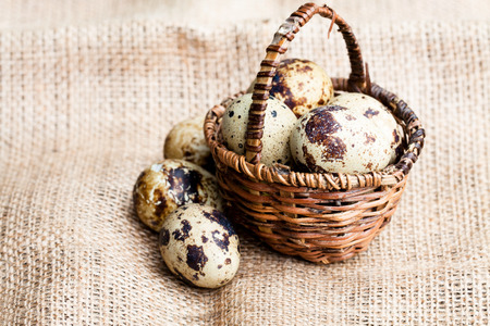reproduce: Quail  eggs in a small wicker basket