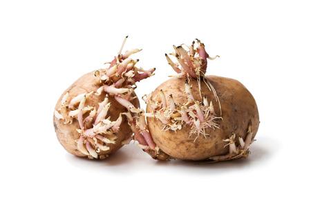vieilles pommes de terre avec des germes isolé sur blanc