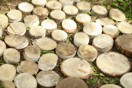 Tree stumps background. The original texture of a beautiful round wood