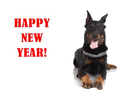 Beauceron dog on white background and inscription happy new year. Stock Photo