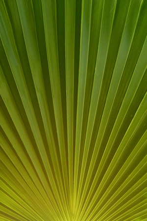 Green leaf closeup, floral texture. Nature background, plant foliage wallpaper macro view