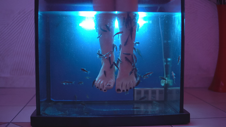 Legs of young girl in an aquarium with fish - special healing therapy Stockfoto