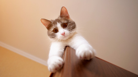 playful cat is lying on the closet and she hangs a paw looking at camera