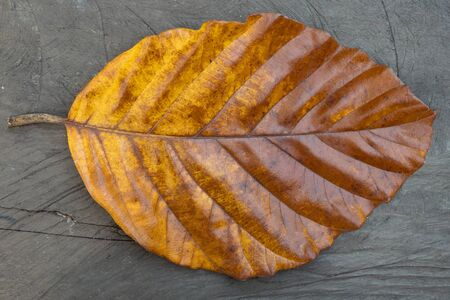 Large yellow leaf of a tree on gray wooden background.