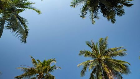high tropical palm trees rise above beach under scorching sun against boundless blue sky low angle shot Stock Photo