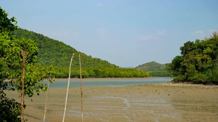 Low tide in the mangroves. Open sludge with puddles.