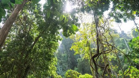 breathtaking dense tropical forest with rich flora lush bushes and high trees against white sky and bright morning sunlight
