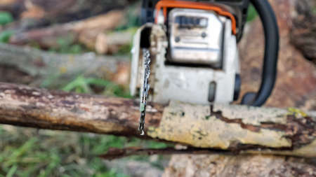 Close-up of sawing a dry branch with a chainsaw.