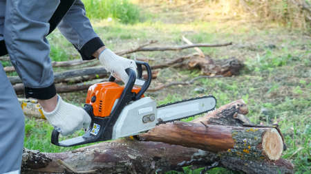 Close-up of sawing a dry log with a chainsaw.