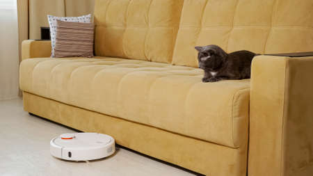 Gray cat watches the work of the robot vacuum cleaner lying on the couch.